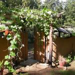 How Christina's Garden began