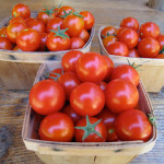 Tumbler tomatoes in containers, part 2