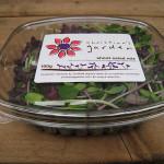 shoot salad mix